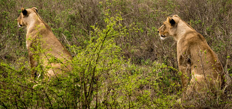 Exploresafaris_Nairobi-National-Park