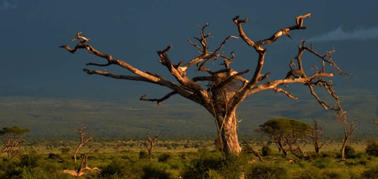 amboseli_Explore Safaris