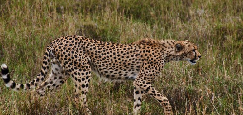 leopardexploresafaris