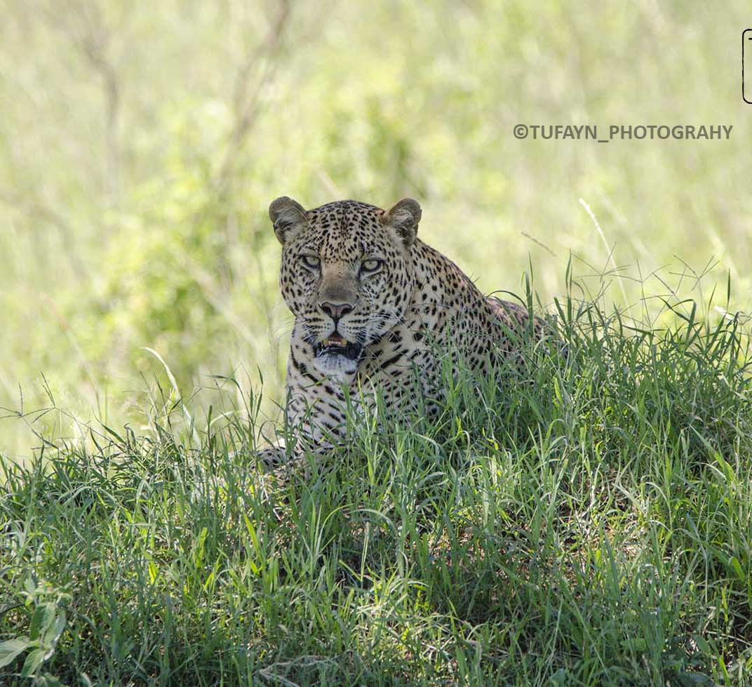 Maasai Mara-Explore