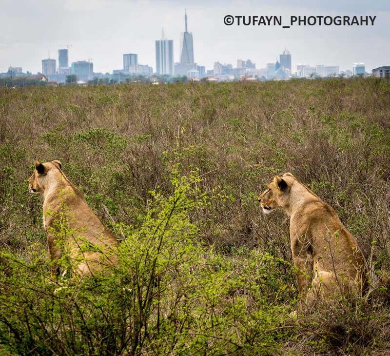 NairobiNational Park