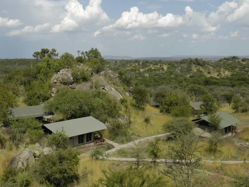 mbuzi