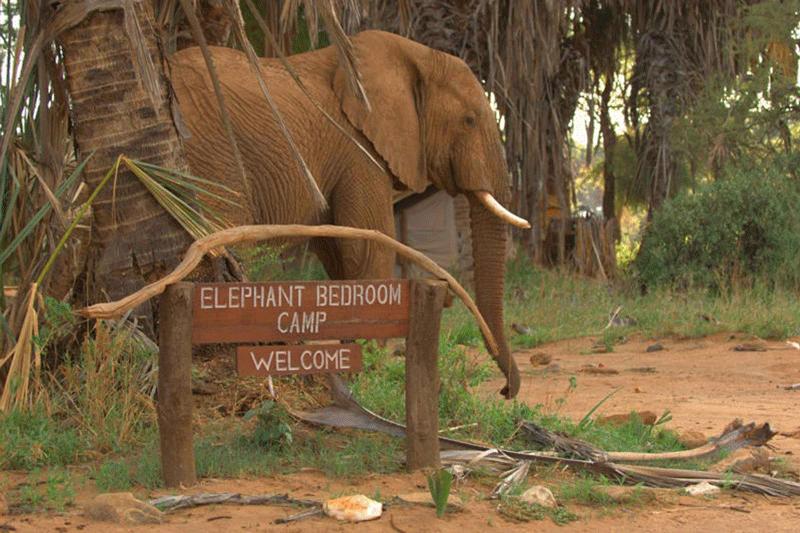 Explore_Elephant-Bedroom-Camp—Samburu-(2)