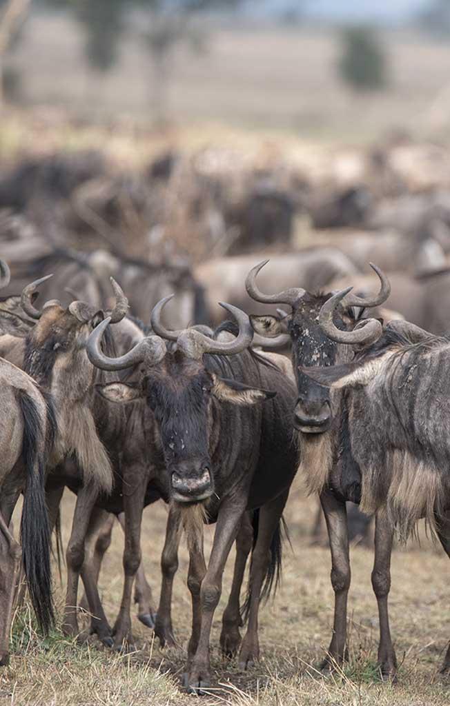 Explore_Tanzania-safari