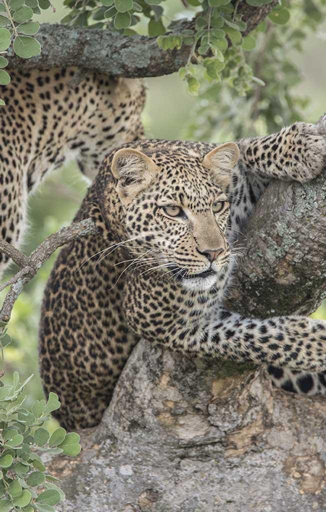 Explore_kenya-safari